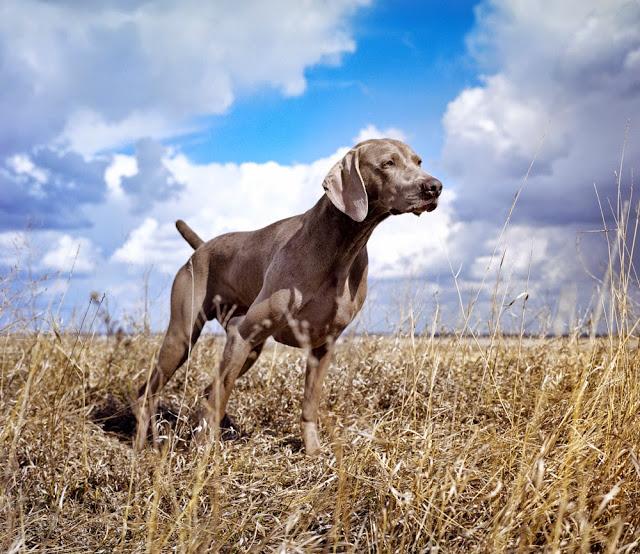 Będziemy mieli psa - Piesologia