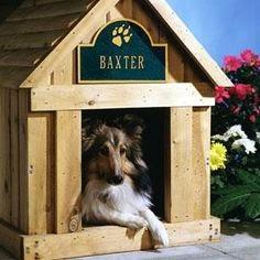 Jak wybrać imię dla psa?