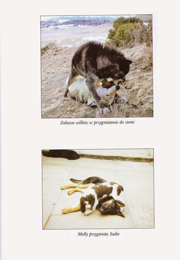 Zapomniany język psów - recenzja