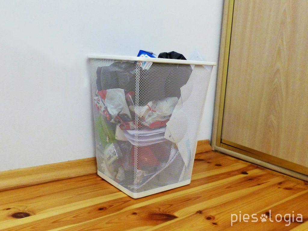 Jak przygotować mieszkanie na przybycie szczeniaka?