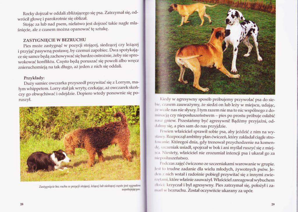 """""""Sygnały Uspokajające"""" czyli jak psy unikają konfliktów?"""