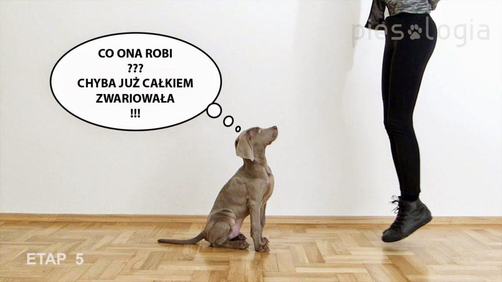 """Jak nauczyć psa komendy """"siad""""?"""
