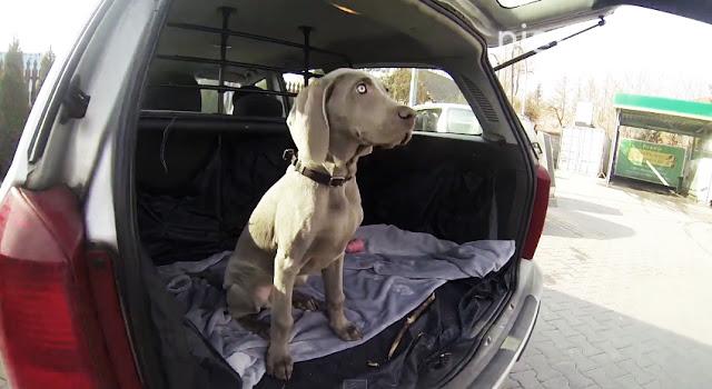 jazda z psem