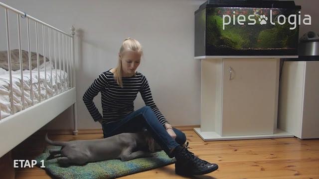 """Jak nauczyć psa komendy """"waruj""""?"""