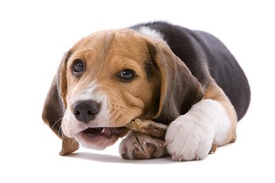 Jak przestawić psa na BARF?