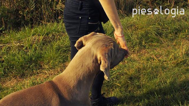 Jak nauczyć psa targetowania?