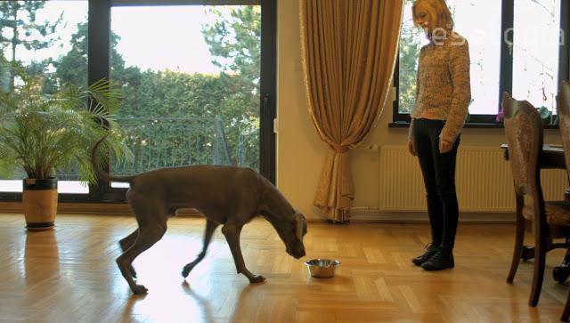 Jak nauczyć psa komendy zwalniającej