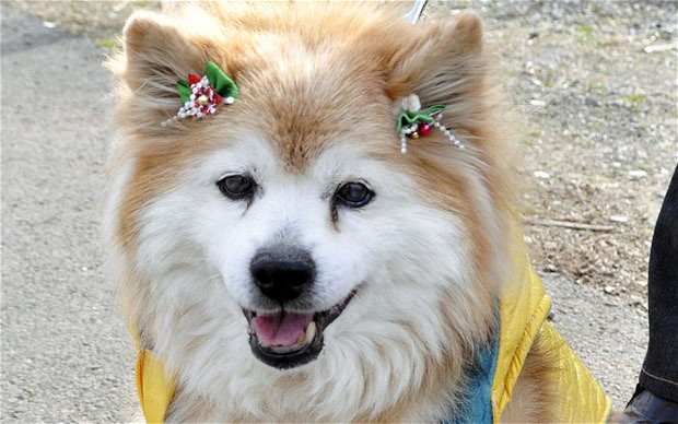 Etapy życia psa