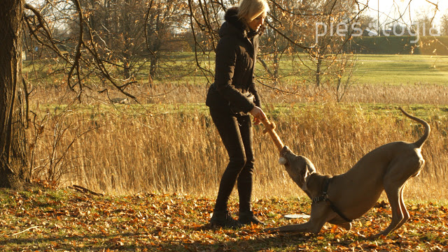 Jak nagradzać psa?