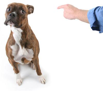 Jak karać psa?