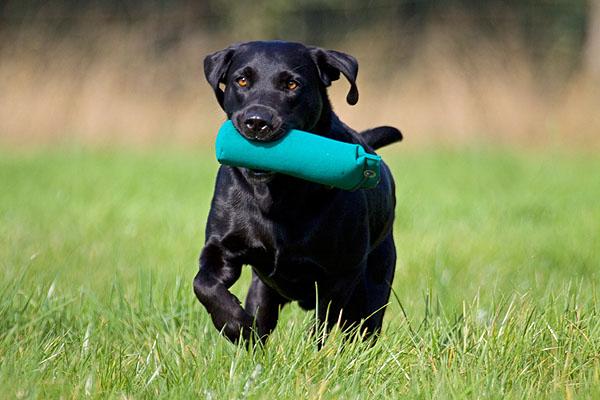 Psie sporty - Dummy