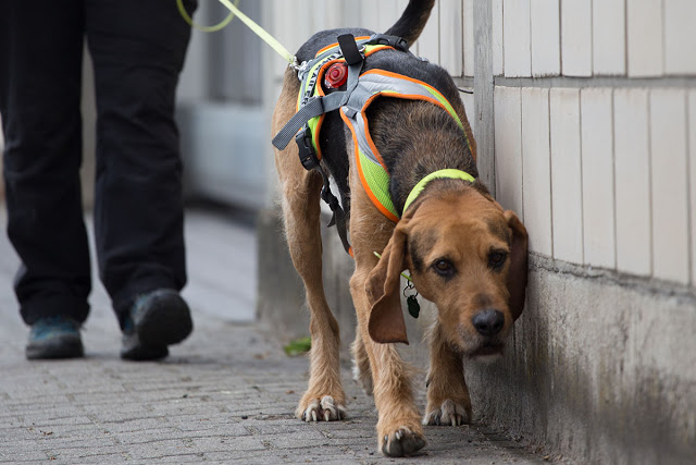 Psie sporty - tropienie użytkowe