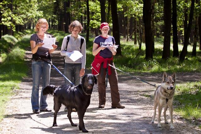 Psie sporty - Dogtrekking