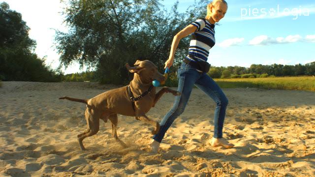 Aktywny spacer z psem latem - Piesologia