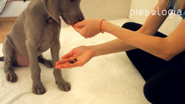 Jak nauczyć szczeniaka, by nie gryzł nas po rękach? Piesologia