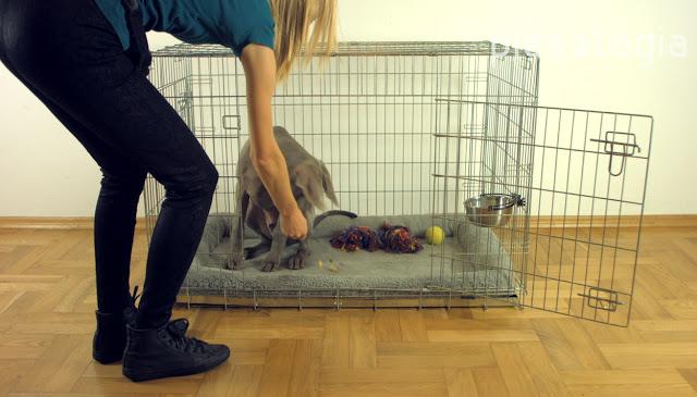 Jak przyzwyczaić psa do klatki? - Piesologia