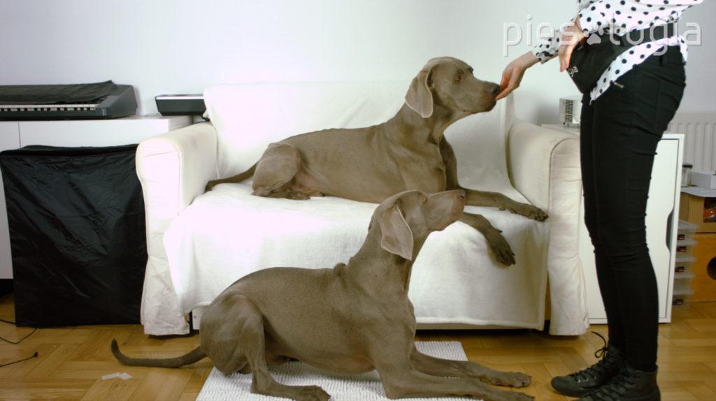 jak szkolić dwa psy