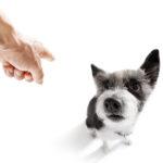 karanie psa