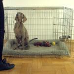 jak przyzwyczaić psa do klatki