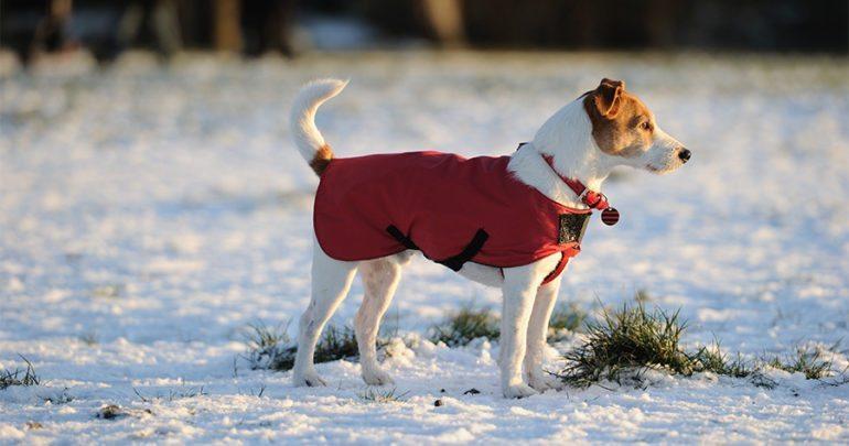 0c86c1ba7a666 A co z naszymi psami? Większość z nich również zmienia sierść w zależności  od panujących na zewnątrz temperatur.