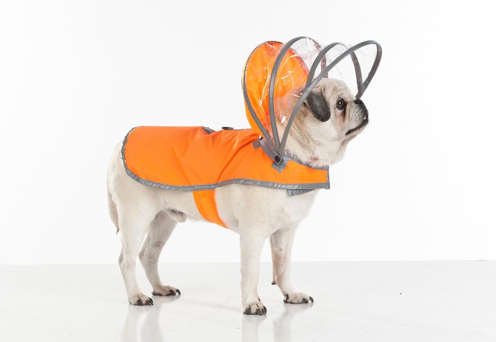 c84836da65d62 Takie ubranko w jaskrawym żółtym kolorze, z dziwnym kapturem może powodować  nadmierną ciekawość lub nawet agresję wśród innych psów. (dog-milk.com)