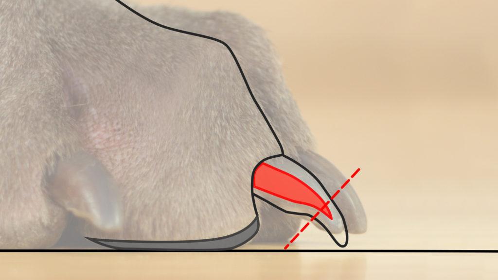Jak obcinać psu pazury?
