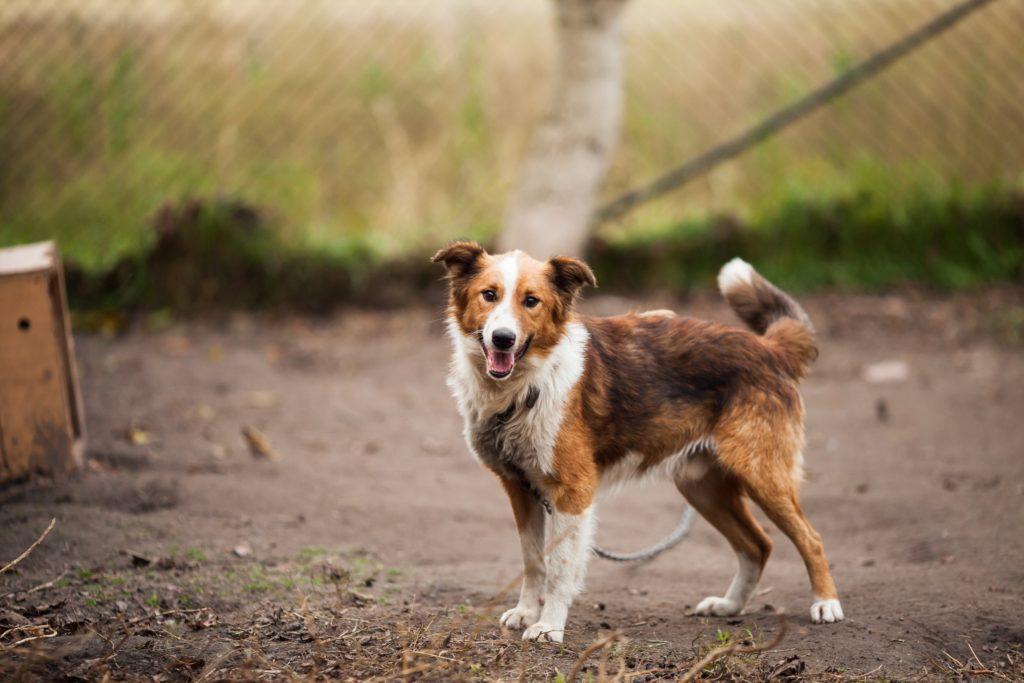 Pies po przejściach