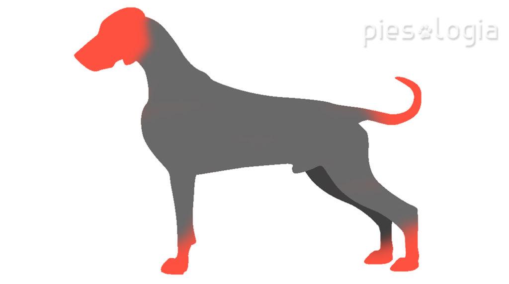 Jak NIE głaskać psa? Strefy, w których pies nie lubi być głaskany