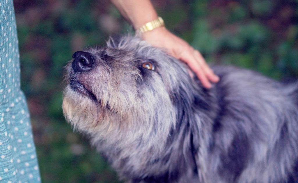 nagradzanie psa