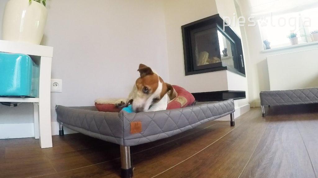 Jak wybrać hotel dla psa?