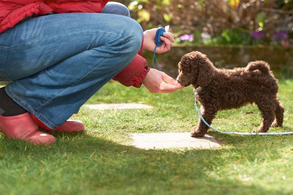 szkolenie szczeniaka