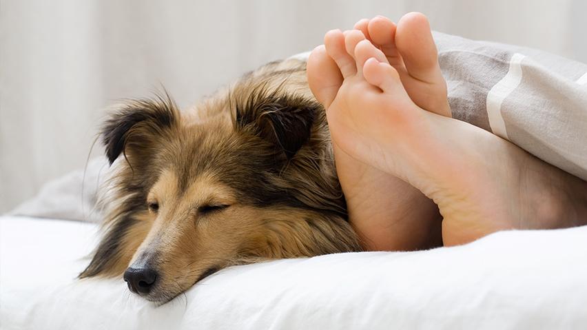 Pies w łóżku zdjęcie 6