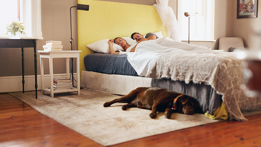 Pies w łóżku zdjęcie 7