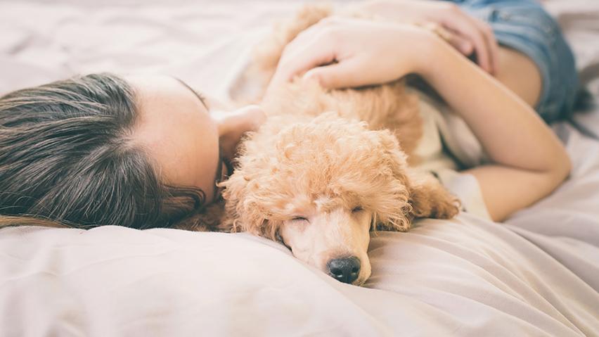 Pies w łóżku zdjęcie 3