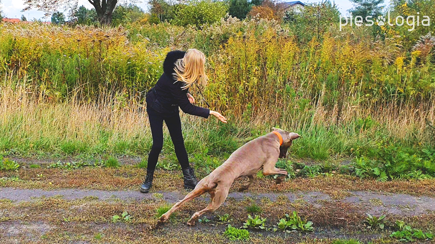 Gdy pies nie je smakołyków - zabawa 2