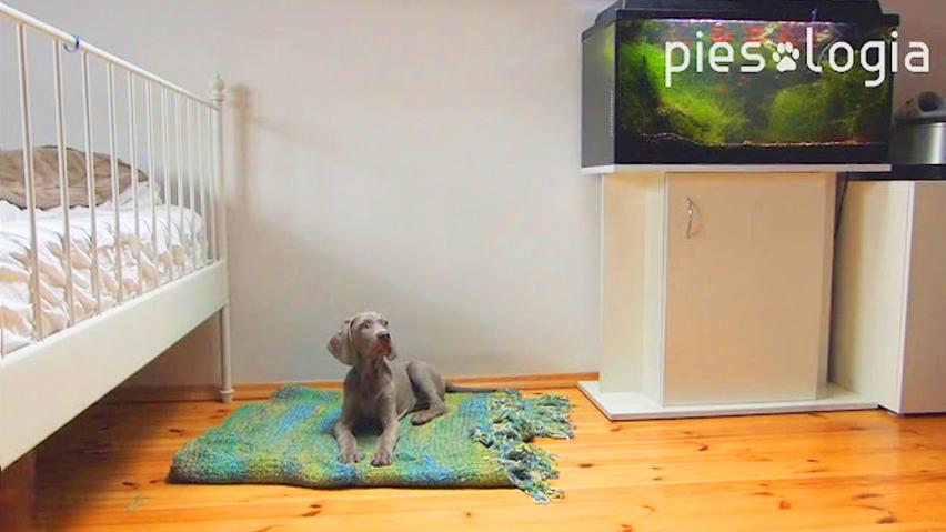 Jak nauczyć psa komendy waruj