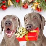 prezent dla psa