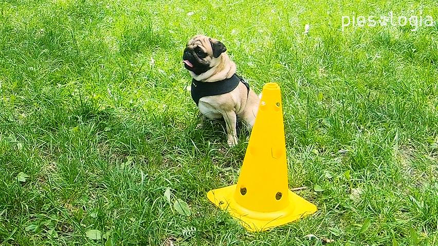 pies nie słucha na spacerach
