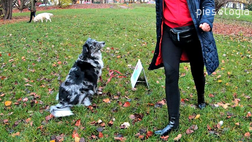 powtarzanie poleceń psu