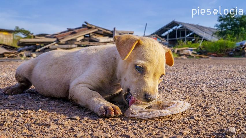 psa zjadania śmieci