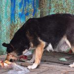 pies zjada śmieci