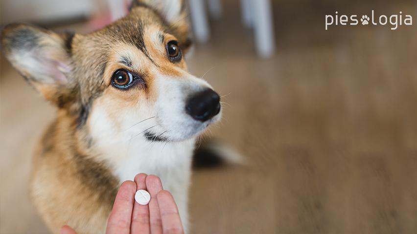 pies dostaje leki