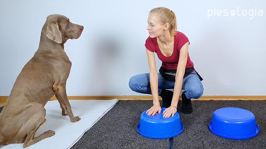 cztery sposoby nauki psa