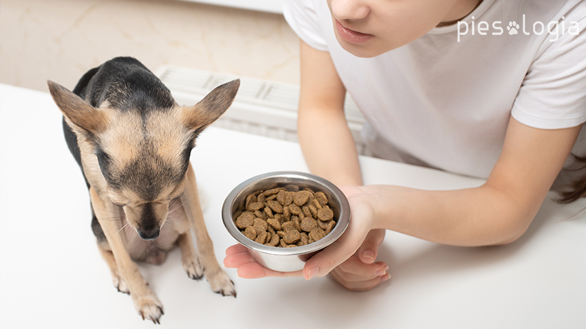 pies nie chce jeść, bo nie smakuje mu karma