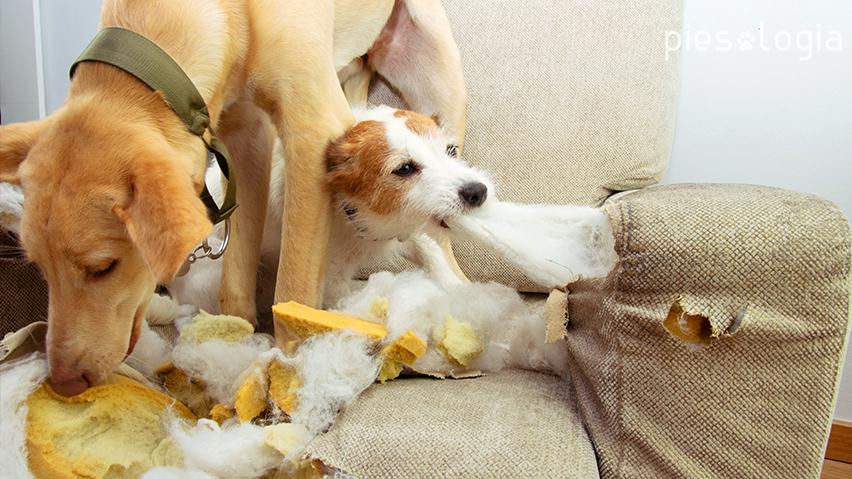 lęk separacyjny u psa - przyczyny
